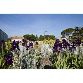SOPREMA - Toundra Flore - Système de végétalisation extensif et biodiversité